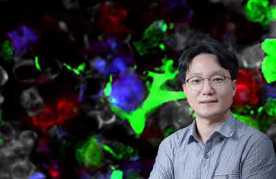 융합생명 이승우 교수팀, 장내 미생물 신호 전달 메커니즘 규명